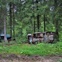 Тайны леса 3 :: Валерий Талашов