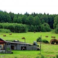 Сельская жизнь :: OLLES