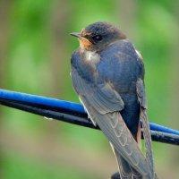 маленькие птички :: Юлия Ошуркова