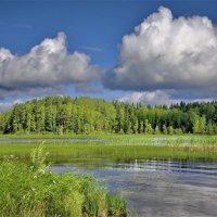 Летний день на Ковжском озере :: Валерий Талашов