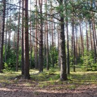 В лесу :: Ольга Осовская