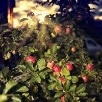Закат в яблоках) :: Лилия .