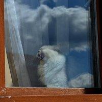 """Соло: """" Облака! Белогривые лошадки..."""" :: Татьяна Помогалова"""