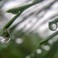 После дождя :: Николай Сапегин