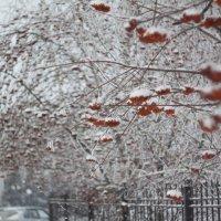 Зима :: Николай Потанин
