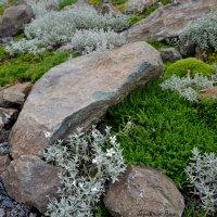 Камни и травы :: Яша Баранов