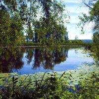 Утром на озере. :: Анатолий
