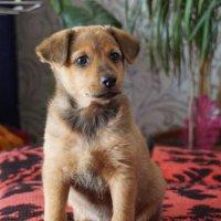 Нашли щенка :: Наталия Григорьева