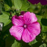 Цветы в саду :: Александр Гладких