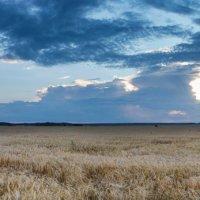 панорама поле и облака :: Егор Кандауров