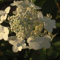 Невеста :: Syntaxist (Светлана)