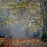 В парке туманном......... :: Юрий Цыплятников