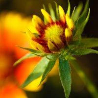 Солнечный цветок :: Аня Валеева