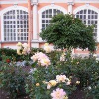 Лаврские розы. :: Татьяна