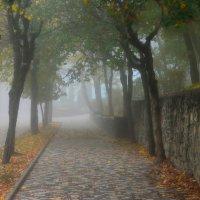 Осенний променад......... :: Юрий Цыплятников