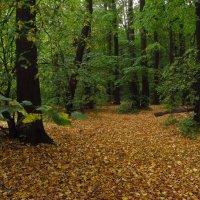 Скоро осень, за окнами - август :: Андрей Лукьянов