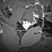 На гнезде! :: Владимир Шошин