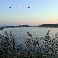Раннее утро на озере :: Геннадий Ячменев