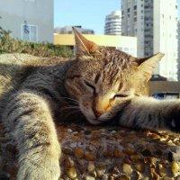 Кот в большом городе :: m&k As