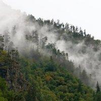 Туман :: Александр Пиленгас