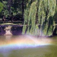 Радуга на воде. :: barsuk lesnoi