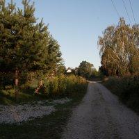 Утро в деревне. :: Владимир Безбородов