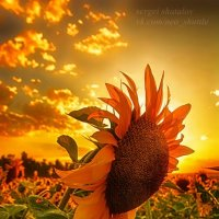 Два солнца :: Сергей Шаталов
