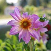 О разноцветье летних клумб.. :: Андрей Заломленков
