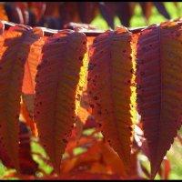 Осенние листья :: Юрий ГУКОВЪ
