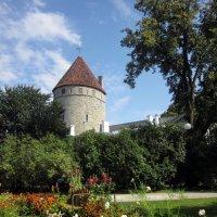 Башня Старого Таллина :: veera (veerra)