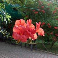 Цветы юга :: Тамара Бедай