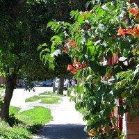 Август на дворе, осень на пороге, яростное солнце стало чуть добрей... :: Татьяна Смоляниченко
