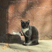 кот,который гуляет сам по себе.. :: Зинаида