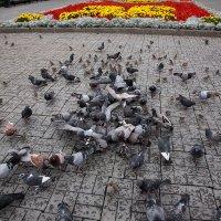 Птицы :: Владимир Габов