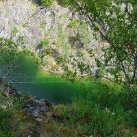 Изумрудная зелень листвы и воды... :: Виктор Мухин