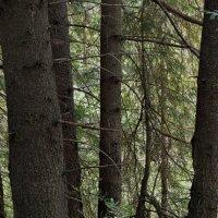 В лесной чаще :: Валерий Талашов