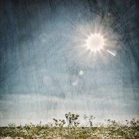 Ромашковое солнце. :: Андрий Майковский