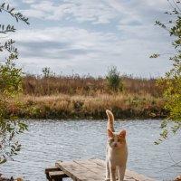Осенний кот :: Ирина ***