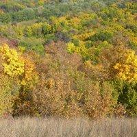 Осенний лес :: Елена Елена