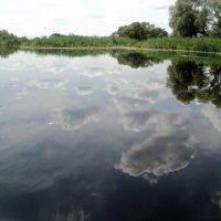Ах, здравствуйте реки, вот такой ширины! :: Ольга Кривых