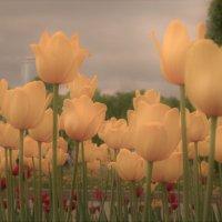 Городские цветы. :: Лариса Красноперова