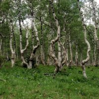 Пьяный лес. :: Марина Фомина.