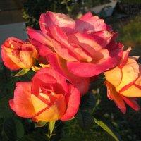 Букет роз в саду :: sm-lydmila Смородинская