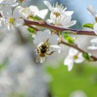 Воспоминание о весне :: Сергей Тарабара