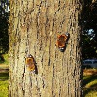 Августовские бабочки :: Минихан Сафин
