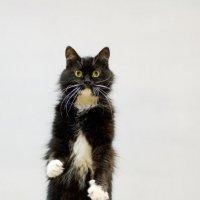 котишка :: Юрий Ивукин
