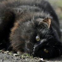 Кошачья нега :: Ольга Винницкая (Olenka)