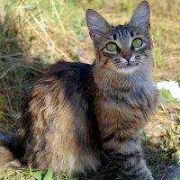 Ну и когда же перелётные коты полетят?:) :: Андрей Заломленков