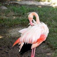 Фламинго :: Татьяна Ларионова