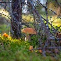 грибы пошли :: Александр Фёдоров
